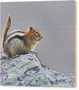 Golden-mantled Ground-squirrel Wood Print