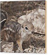 Golden Mantled Squirrel Wood Print