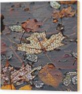 Golden Maple Dew Drops Wood Print