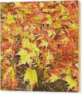 Golden Maple Leaves Wood Print