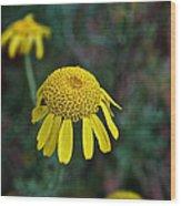 Golden Margurite Wood Print