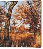 Golden Oaks Wood Print
