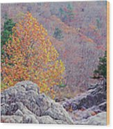 Golden Poplar Among The Rocks At Johnsons Shut Ins State Park Wood Print