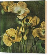 Golden Poppies Wood Print