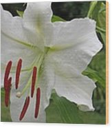 Golden Rayed  Lily Wood Print