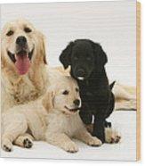 Golden Retriever And Puppies Wood Print by Jane Burton