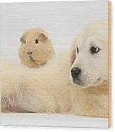 Golden Retriever Pup And Guinea Pig Wood Print