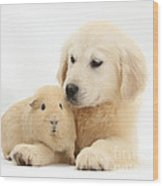 Golden Retriever Pup And Yellow Guinea Wood Print by Mark Taylor