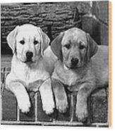 Golden Retriever Pups Wood Print