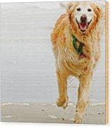 Golden Retriever Running On Beach Wood Print by Stephen O'Byrne
