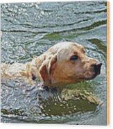 Golden Retriever Swimming Close Wood Print