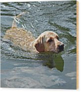 Golden Retriever Swimming Wood Print