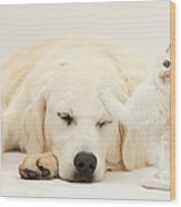 Golden Retriever With Two Kittens Wood Print