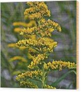 Golden Rod Wood Print