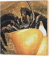 Golden Seashell Crab Still Life Wood Print