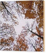 Golden September ... Wood Print