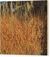 Golden Silver Grass Wood Print