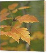 Golden Sprig Wood Print