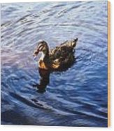 Golden Star Duck Wood Print by Joan Meyland