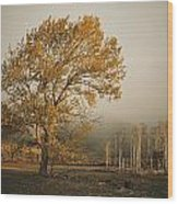 Golden Sunlit Tree With Mist, Yakima Wood Print