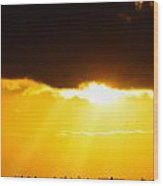 Golden Sunset On Farmland Wood Print