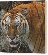 Golden Tabby Bengal Tiger Wood Print