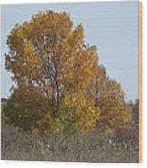Golden Tree II Wood Print