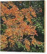 Golden Tree Moment Wood Print