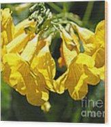Golden Trumpets Wood Print
