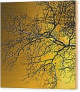 Golden Walnut Tree Wood Print