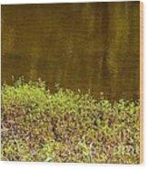 Golden Water's Edge Wood Print