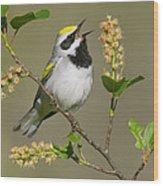 Golden-winged Warbler Vermivora Wood Print