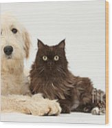 Goldendoodle And Chocolate Cat Wood Print