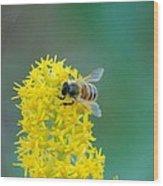 Goldenrod Visitor 3 Wood Print
