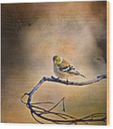 Goldfinch In Deep Thought Wood Print by J Larry Walker