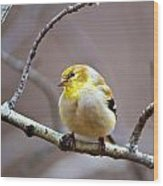 Goldfinch In March Wood Print
