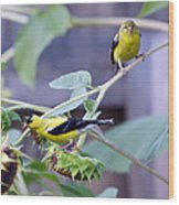 Goldfinch Pair Wood Print