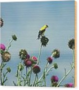 Goldfinches On Thistles Wood Print