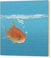 Goldfish Carassius Auratus Wood Print