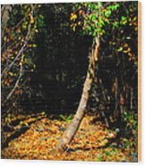 Golds Into The Natural Tunnel Wood Print