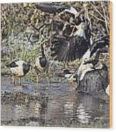 Goose Fight Wood Print