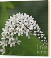 Gooseneck Flowers And Buds Wood Print