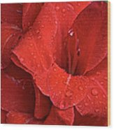 Gorgeous Glads Wood Print by Susan Herber