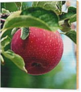 Gorgeous Red Apple Wood Print