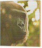 Gorilla At Dusk Wood Print
