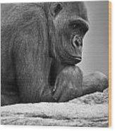 Gorilla Portrait Wood Print