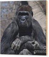 Gorilla Wood Print