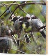 Gossip Birds Wood Print