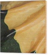 Gourd Green Orange Macro 1 Wood Print