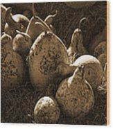 Gourds In Sepia Wood Print